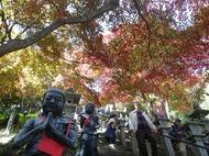 紅葉が綺麗な神奈川の大山