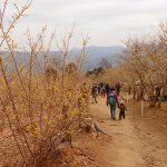 もうすぐ3歳子供と蝋梅咲く宝登山ハイキング。下山はロープウェイ。