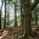 筑波山の白雲橋コースは静かで澄んだ空間。つつじや桜が咲き、山頂には貫禄の紫峰杉